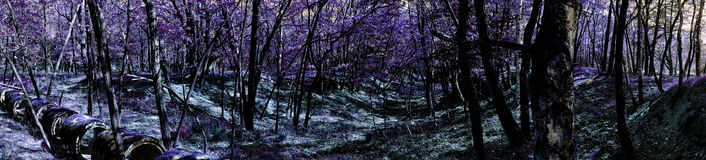 Panoramic landscape of fantasy woods. Panorama of woodlands in fantasy colors of black and purple Stock Photos