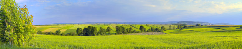 Panoramic landscape with green fields and trees