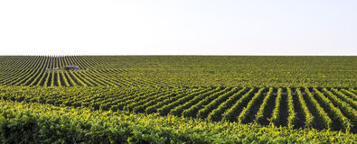 Panoramic landscape of harvesting fields Stock Image