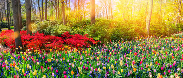 Panoramic landscape with multicolor spring flowers. Nature backg