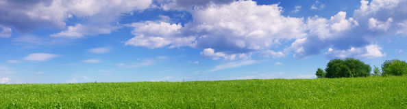 Panoramic Landscape Of Green Summer Meadow Stock Photo