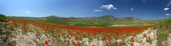 Panoramic landscape with poppies. Panoramic landscape view with poppies. Hi res stitched  image Royalty Free Stock Photos