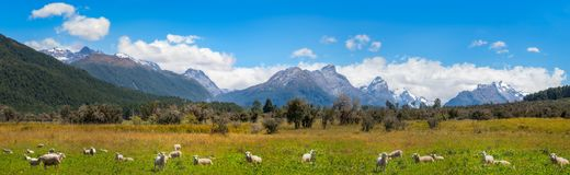 Meadows and snow-capped mountains at Mount Aspiring National Park. Panoramic landscape scenery at Mount Aspiring National Park with meadows with sheep in the Stock Photography