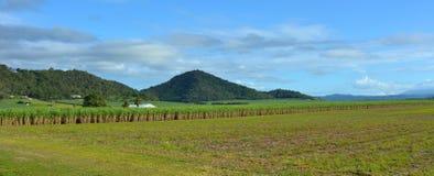 Panoramic landscape of sugar farm Royalty Free Stock Photo