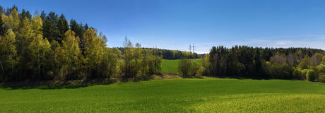 Panoramic landscape. Panoramic summer landscape with blue sky, green field and forest Royalty Free Stock Image