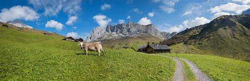 Panoramic landscape switzerland with cabins and cow on the pastu. Panoramic landscape switzerland with mountain view and cow on the pasture, partnun prattigau Royalty Free Stock Images