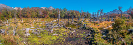 Panoramic landscape of Tierra del Fuego National Park, Patagonia Royalty Free Stock Photography