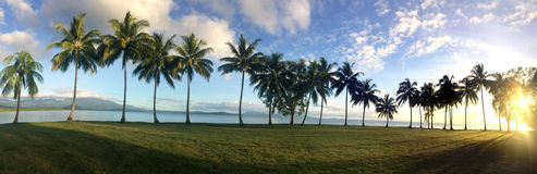 Panoramic landscape view of a Row of palm trees in Port Douglas Royalty Free Stock Image