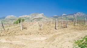 Panoramic landscape with vineyards Royalty Free Stock Photo