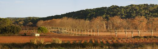 Panoramic landscape of the vineyards Royalty Free Stock Image