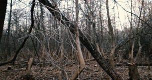 Panoramic look around in dark woods stock footage