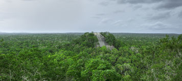 Panoramic Maya Temple 1 in Calakmul, Campeche Stock Photography