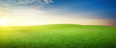 Panoramic meadow Stock Photography