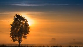 Panoramic morning scenery of sunrise over foggy meadow Royalty Free Stock Photography