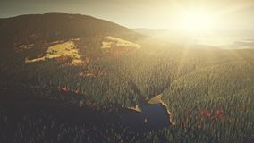 Panoramic mountain forestry slope dawn aerial view stock video