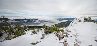 Panoramic mountain landscape with pine trees in the foreground Royalty Free Stock Images