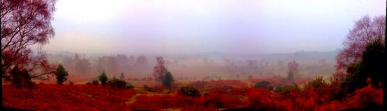 Panoramic new Forest autumn colours Royalty Free Stock Photo