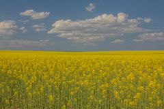 Panoramic of a newly arrived crop field the spring. North of Spa stock images
