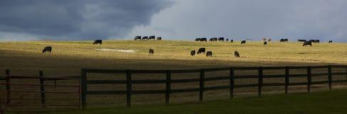 Panoramic Pasture Royalty Free Stock Photo