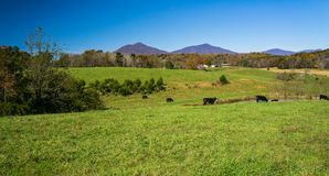 A Panoramic Peaks of Otter, Bedford County, Virginia, USA. Autumn view of the Peaks of Otter located in the Blue Ridge Mountains located in Bedford County stock photo
