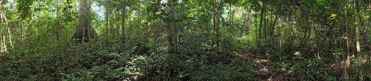 Panoramic photo of the Brazilian Amazon forest royalty free stock images