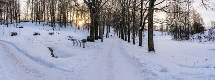 Panoramic Photo of an Empty Walkway in Park in Alley on Sunny Winter Evening. Concept of Sadness and Loneliness royalty free stock photos