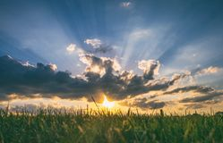 Panoramic Photo of a Sunset in a Green Grass Field Royalty Free Stock Image