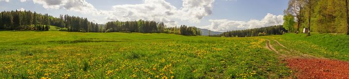 Panoramic photography of Dandelion field with Pine tree forest b. Ackground under sunny sky in Czech republic countryside Stock Images