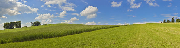 Panoramic picture with corn field and blue sky. In the summer sun Stock Images