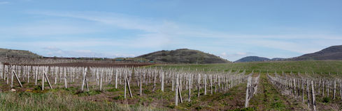 Panoramic picture of mountains and vineyard in April. Mountains, vineyards, the train at the left, cumulus clouds on horizontal panoramic photos Stock Images