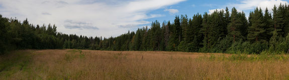 Panoramic prospect of woody district. Panoramic prospect through a pasture to the summer woody district covered with foliage under the dark blue sky Stock Photo