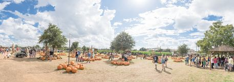 Panoramic pumpkins garden and people at local farm in Texas, Ame stock photography