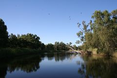 Panoramic River Waterhole. Birds flying over waterhole in the river, waiting to land. outback NSW Australia Stock Image