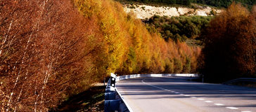 Panoramic road with autumn colors and trees Stock Photo