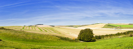 Panoramic Rolling Farmland Royalty Free Stock Images