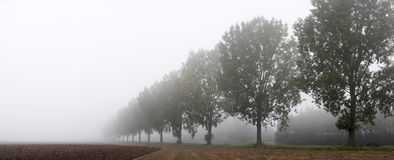 Panoramic - row of trees. On the field egde in the mist; copy space available Royalty Free Stock Photos