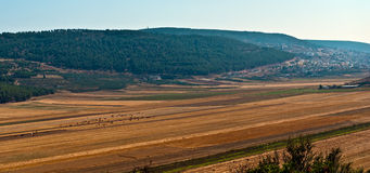 Panoramic rural landscape . Stock Photo