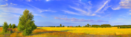 Panoramic rural landscape with birch. Rural landscape with meadows, birch and blue sky with various clouds. Panoramic HDR image. Poland, Swietokrzyskie Stock Image