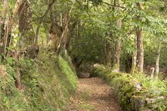 Panoramic rural road full of leafy vegetation in green tones royalty free stock images