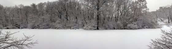 Panoramic scene of the pond Royalty Free Stock Images