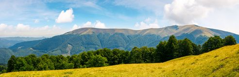 Panoramic scene of a summer landscape. Beautiful view of a beech forest on a grassy meadow and distant mountain. bright and warm august Stock Image