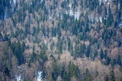 Panoramic scene of winter forest Stock Photo