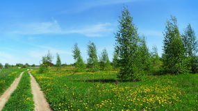 Panoramic scenery with trees birch and country road Royalty Free Stock Photos