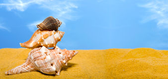 Panoramic Shells On The Beach Royalty Free Stock Photography