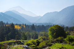 Panoramic shot of mysterious misty pine tree forest with yellow spot and mountains Stock Photo