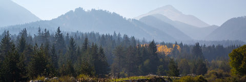 Panoramic shot of mysterious misty pine tree forest with yellow spot and mountains Stock Photography