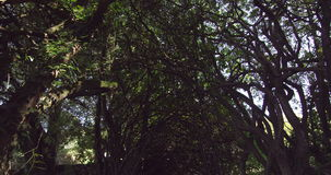 Panoramic shot of peaceful wooded area Royalty Free Stock Photo