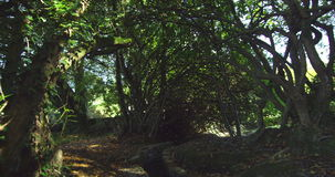 Panoramic shot of wooded area stock footage