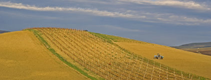 Panoramic sicilian hill. Hill with vineyard, worked from a tractor stock photos