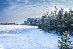 Panoramic snowy winter landscape. Stock Photo